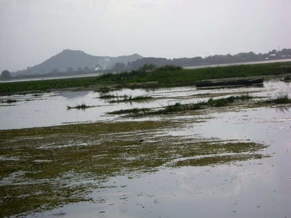 Pollution in Dal Lake