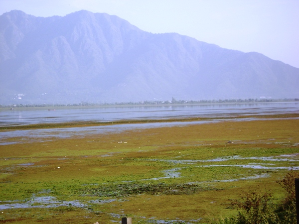 Algal Blooms in Dal lake