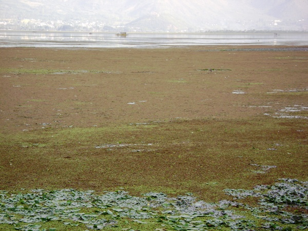 Polluted Dal Lake